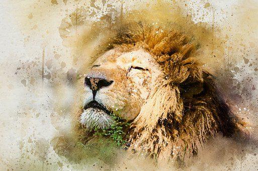 lion-1577197__340