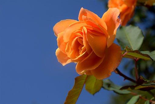 orange-1676950__340